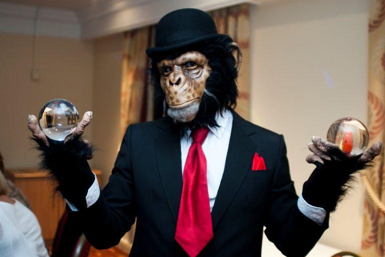 Chimp Monkey Walkabout